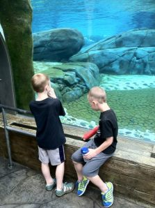 Watching the sea lions swim.